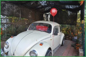 Balloon on Beetle Car